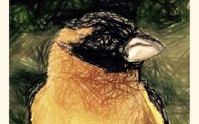 Black-Headed Grosbeck