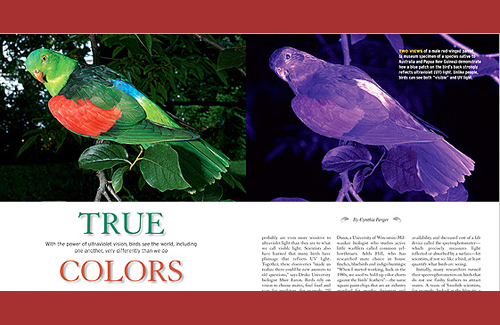 True Colors: How Birds See the World