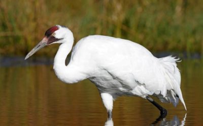 Hurricane season takes toll on birds Massive storms can be a major setback to populations of already endangered species.