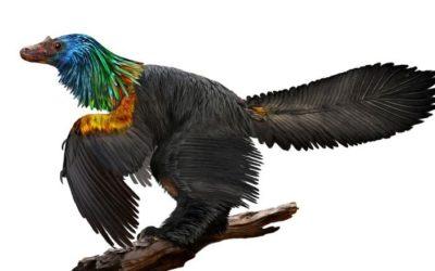 Newly Discovered Dino Had a Rainbow of Shiny Feathers