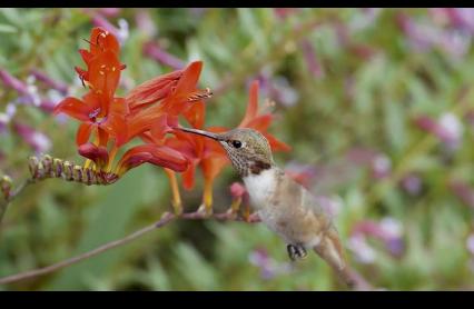 Some Fun Hummingbird Footage