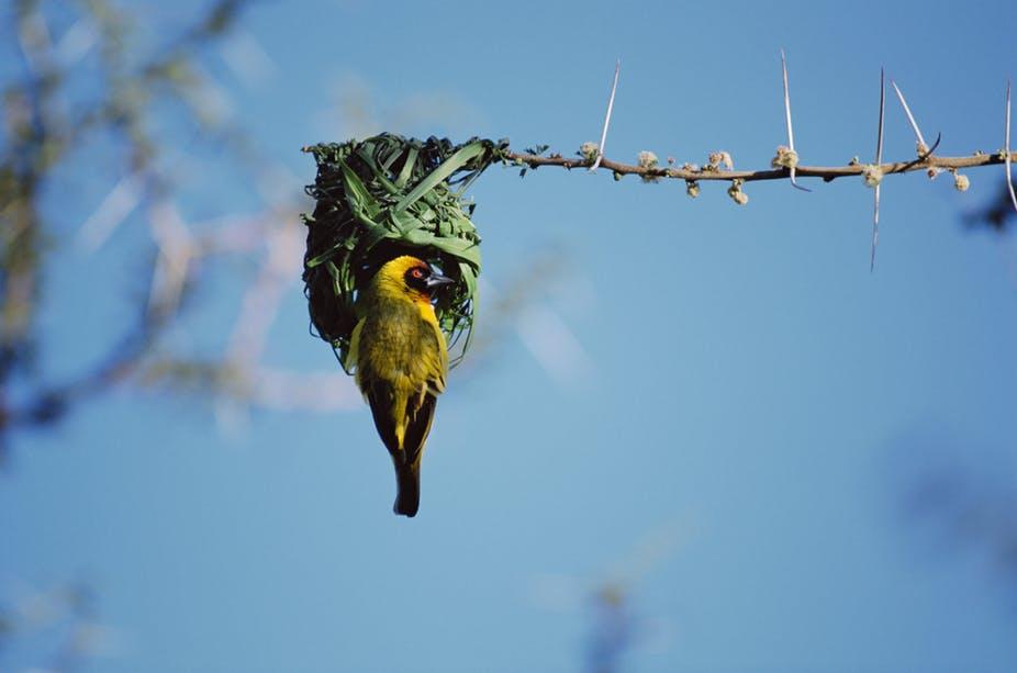 Nests: the art of birds