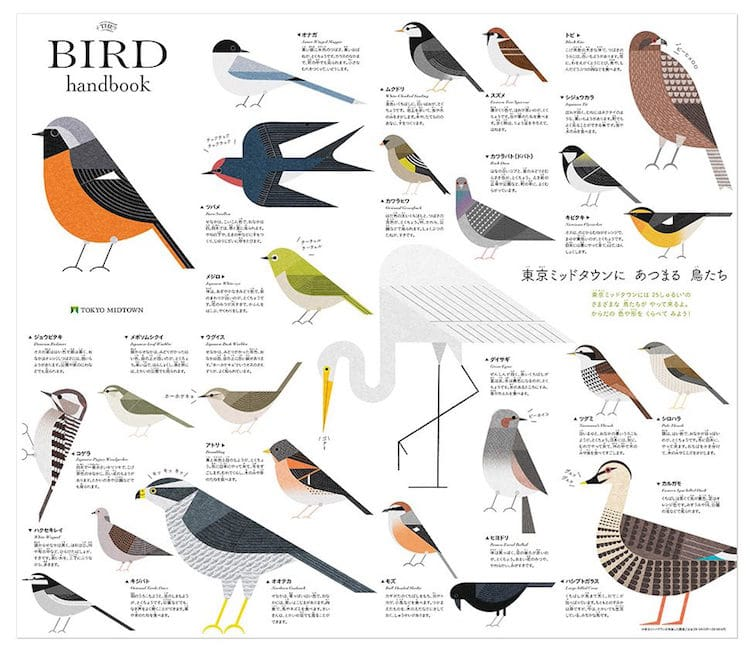 Japanese Illustrator Creates Beautiful Handbook of the Birds You'll Find in Tokyo
