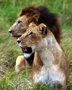 2007 /  LION CONSERVATION FUND