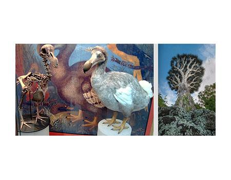 Dodo Bird & Tree of the Dragon