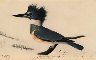 Early John James Audubon Drawings