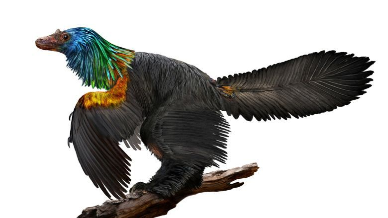 Newly Discovered Dino Had a Rainbow of Shiny Feathers