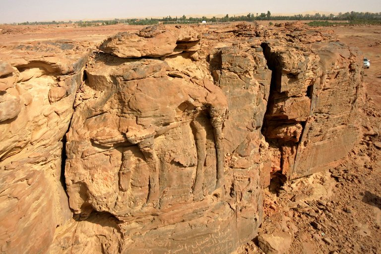 Ancient Artists Carved Camels in Saudi Desert's Stone