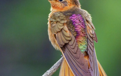 21 Birds That Are More Beautiful Than Any Human: Instagram models of the bird world