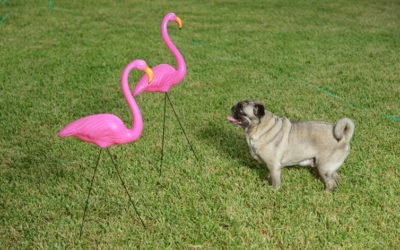 The Cultural History Of The Plastic Pink Flamingo