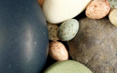 Dinosaurs put all colored birds' eggs in one basket, evolutionarily speaking