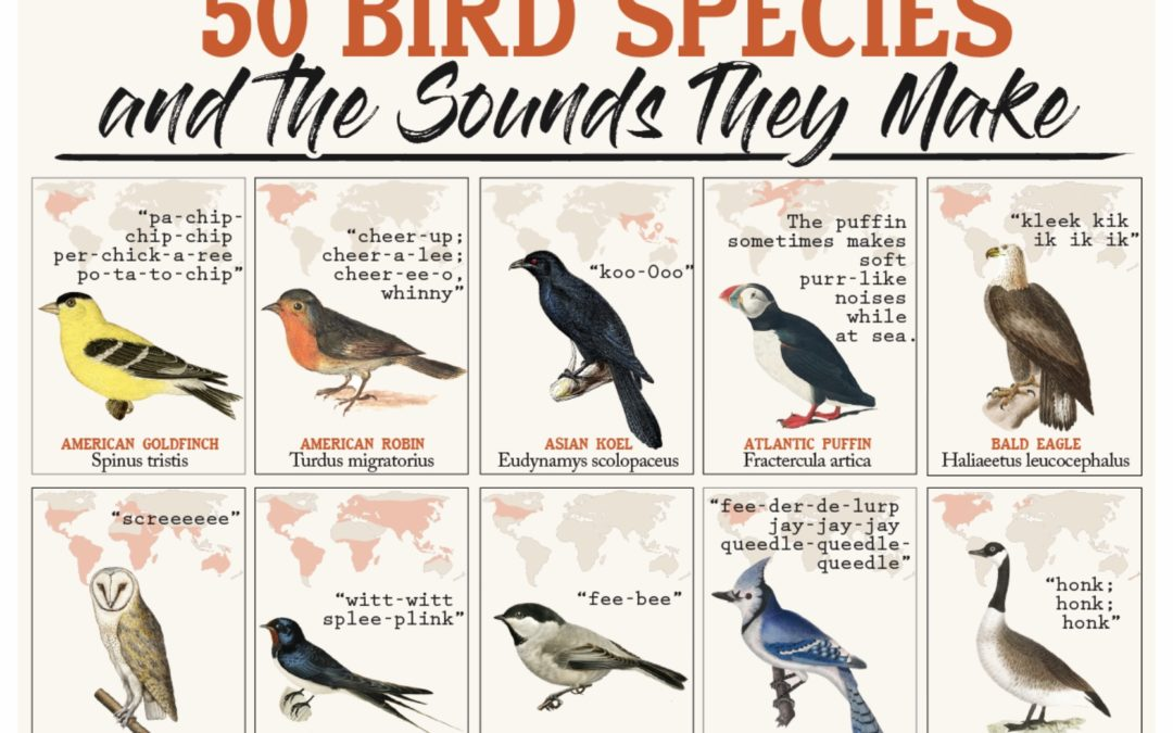 50 Bird Species: And the sound they make.